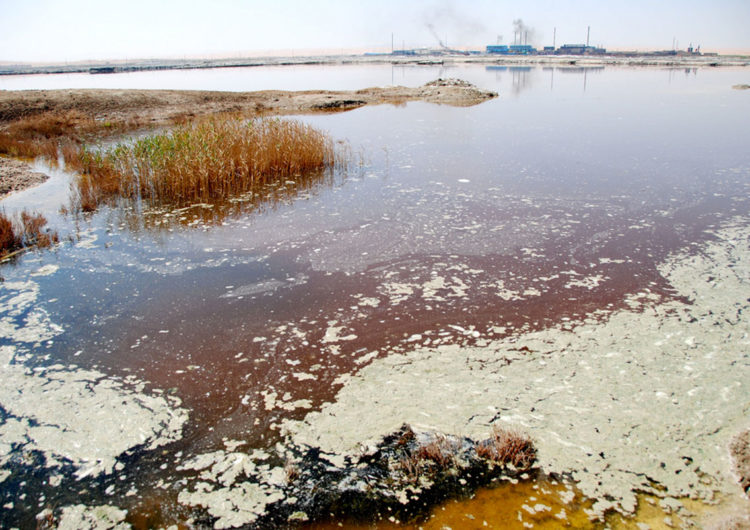 Московский областной суд стал на сторону подмосковных экологов