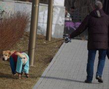 В столичном саду им. Баумана запретили выгул собак
