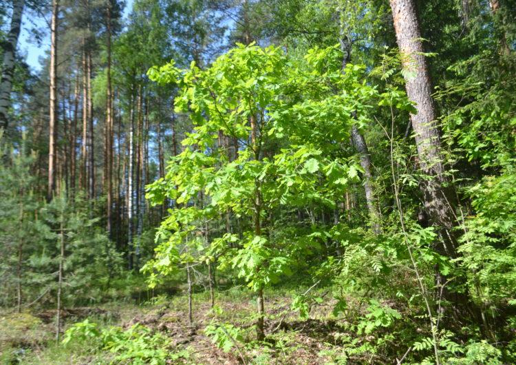Площадь заповедных земель под Подольском увеличат более чем вдвое