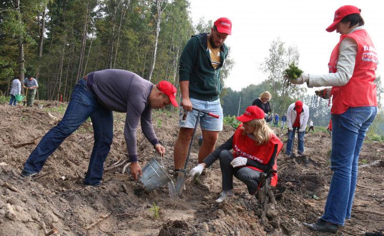 Почти 20 тыс. деревьев и кустарников высадят в рамках акции «Лес Победы» в Подольске