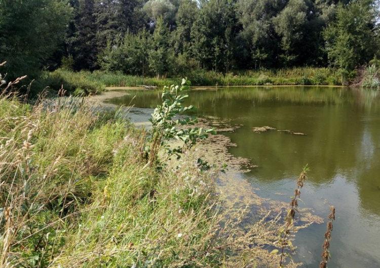 Природный резерват истока Москвы-реки создадут под Можайском