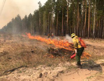 Более чем вдвое возросла за сутки площадь лесных пожаров в Подмосковье