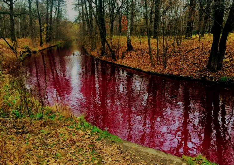 «Багровая река» могла появиться на севере столицы из-за попадания красящих примесей