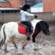 Конюшня с пони в парке «Фили» оказалась под угрозой закрытия