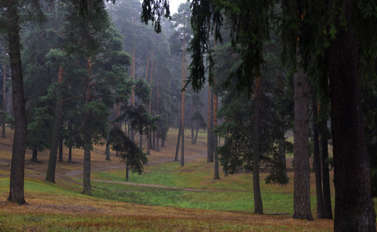В заокской части южного Подмосковья появится памятник природы