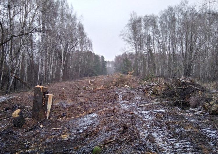 Вырубку деревьев у газопровода в зоне памятника природы в Москве сочли правильной