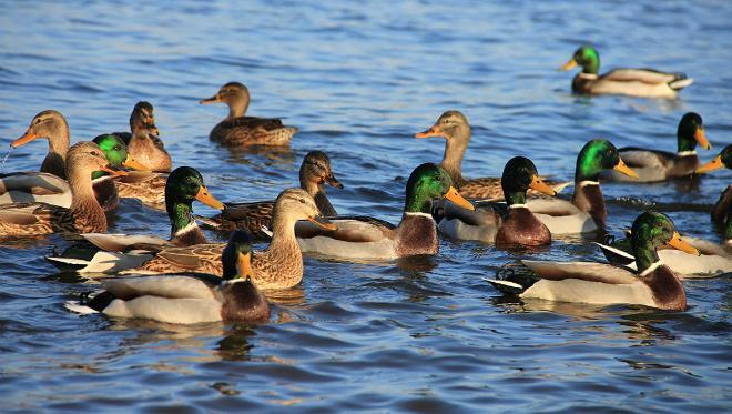 Минэкологии Подмосковья призвало не пугать и не ловить птиц, не улетевших на юг