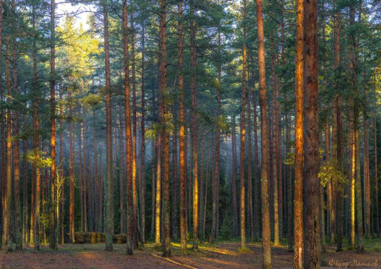 Экологи создали проект памятника природы ближнего Подмосковья
