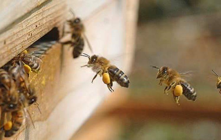 В Битце появились аномально рано вылетевшие пчёлы