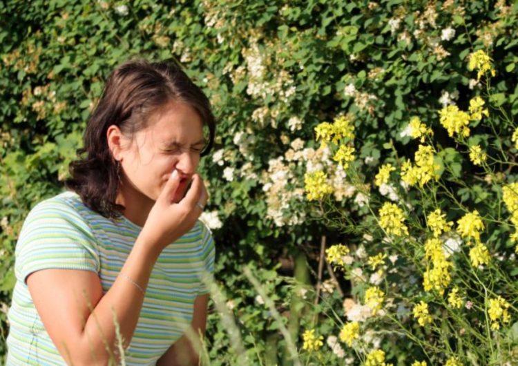 Москва оказалась перед риском наслоения сезонной аллергии и коронавируса