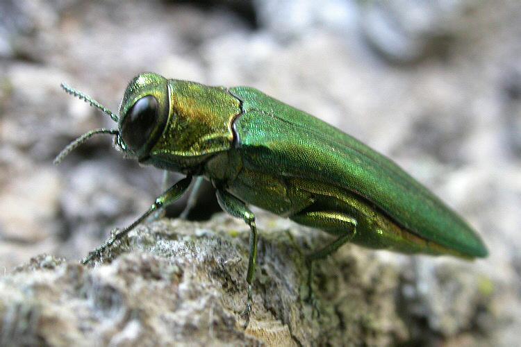Опасное насекомое обнаружили в Подмосковье