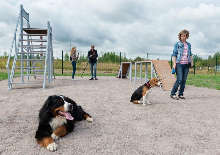 В Серпухове появится первая площадка для выгула собак
