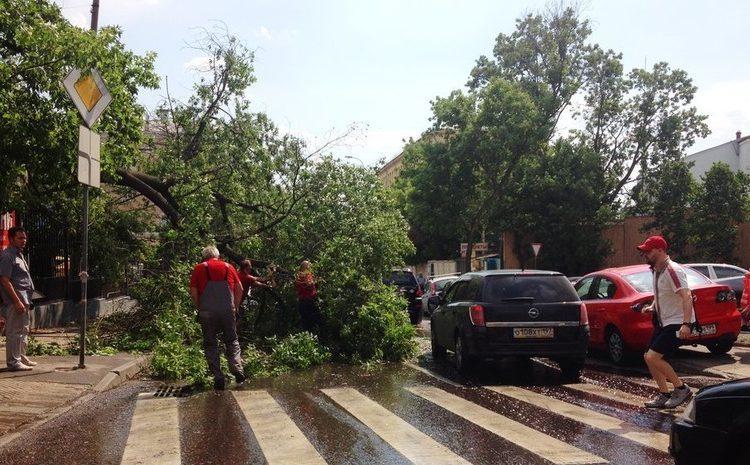 В Подмосковье ураганным ветром повалило около ста деревьев