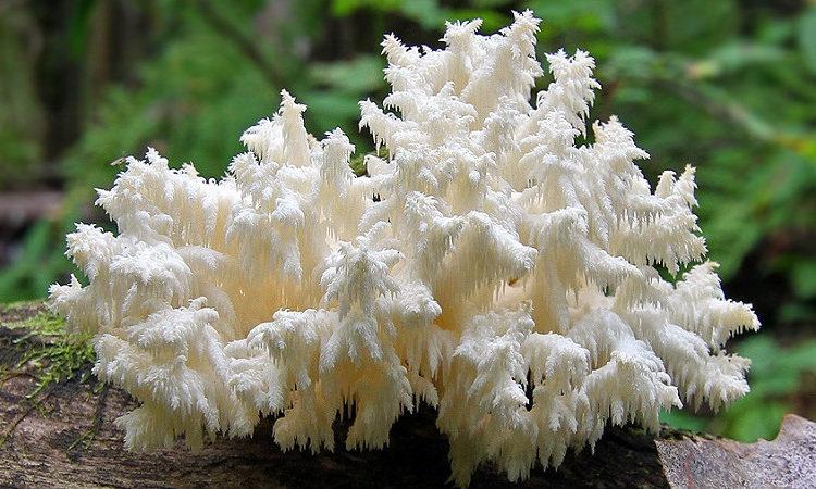 Минэкологии Подмосковья предупредило о штрафах за сбор краснокнижных грибов