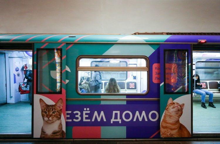 Поезд столичного метро «Хвосты и лапки» за две недели помог приютить 24 животных