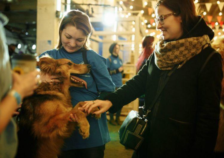 В Москве состоится выставка-пристройство кошек и собак из приютов